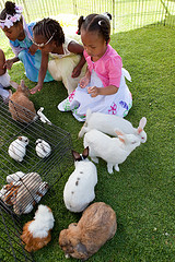 kids parties petting zoo
